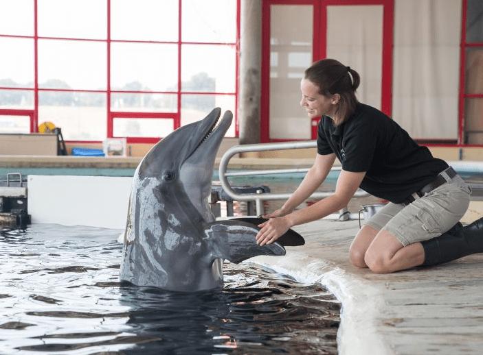 Dolphin Training Session National Aquarium in Baltimore